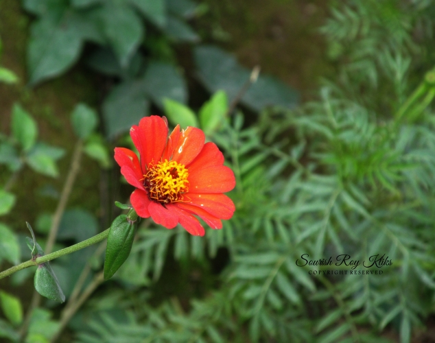IMG_6849_Fotor